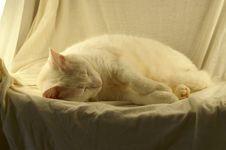 Free White Cat On White Royalty Free Stock Photos - 1263268