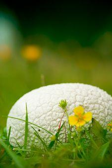 Free Mushroom On Grass Stock Photos - 1264033