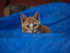 Free Kitten Peeks Over Blue Royalty Free Stock Photography - 1264367