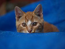 Free Kitten Peeks Over Blue Stock Photo - 1264370