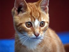 Kitten Whiskers Royalty Free Stock Image