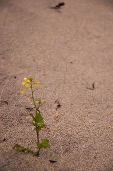 Free Flower In The Sand Royalty Free Stock Photography - 1264977