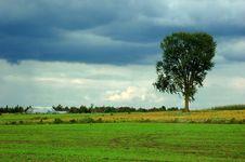 Free Tree Stock Photos - 1265843