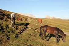 Free Horses Grazing On High Pasture Royalty Free Stock Photos - 1266058