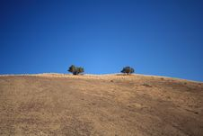 Lonely Trees In The High Desert Stock Image