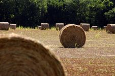 Free Bale Of Hay Royalty Free Stock Photos - 1268408