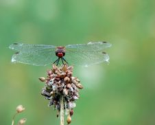 Free Dragonfly Royalty Free Stock Photos - 1268878