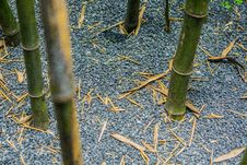 Free Bamboo, Grass Family, Flora, Grass Stock Photo - 126019610