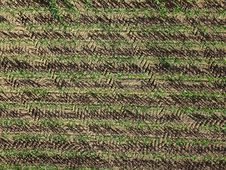Free Grass, Field, Agriculture, Crop Stock Photo - 126019810