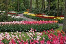 Free Flower, Plant, Flowering Plant, Garden Royalty Free Stock Image - 126019866