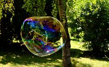 Free Reflection, Tree, Grass, Earth Royalty Free Stock Photos - 126020328