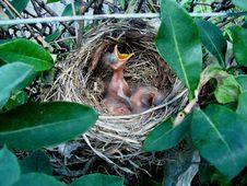 Free Bird Nest, Bird, Nest, Fauna Stock Photos - 126020343