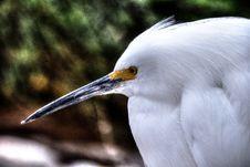 Free Bird, Beak, Fauna, Great Egret Stock Images - 126020404