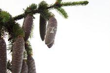 Free Tree, Pine Family, Palm Tree, Arecales Stock Photo - 126020610