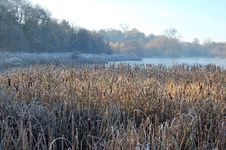 Free Winter, Frost, Water, Phragmites Stock Image - 126020861