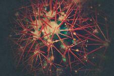 Free Grusonii Rainbow Cactus Filtered Stock Photos - 126071113