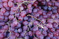 Free Red Grapes Stock Photos - 12619373