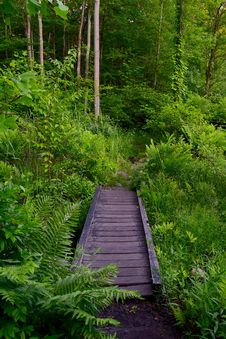 Free Vegetation, Green, Nature, Path Stock Images - 126103394
