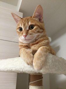 Free Cat, Small To Medium Sized Cats, Cat Like Mammal, Whiskers Stock Photos - 126103453