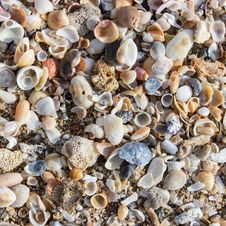 Free Seashell, Cockle, Clams Oysters Mussels And Scallops, Material Royalty Free Stock Photos - 126103558