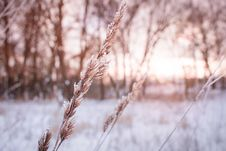 Free Shallow Focus Photography Of Plant During Winter Royalty Free Stock Images - 126176329