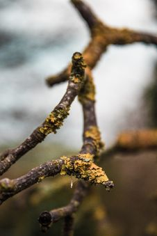 Free Brown Tree Branch Stock Photography - 126176362
