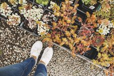 Free Person Wearing White Sneakers Standing Beside Flowers Royalty Free Stock Image - 126176766