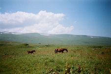 Free Photo Of Two Horses On Grass Field Stock Image - 126176871