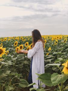 Free Person Standing On Sunflower Field Royalty Free Stock Photo - 126177015
