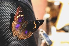 Free Closeup Photography Of Black And Purple Butterfly Perched On Black Textile Royalty Free Stock Photos - 126177158