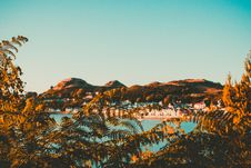 Free Brown Leaf Trees Near Ocean Over Mountain Under Blue Sky Royalty Free Stock Image - 126177456