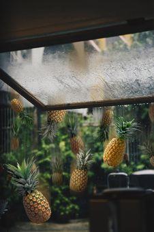 Free Raining Pineapples Stock Photo - 126177560