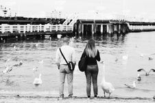 Free Grayscale Photography Of Man And Woman Standing In Front Of Swans On Body Of Water Royalty Free Stock Image - 126177826