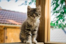 Free Focus Photography Of Black And White Cat Sitting On Brown Wooden Surface Near Tree Royalty Free Stock Photo - 126178015