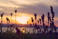 Free Pink Petaled Flowers And River During Sunset Stock Photo - 126178220