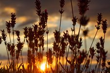 Free Silhouette Photo Of Grass Under Gray Clouds During Golden Hour Royalty Free Stock Images - 126178289