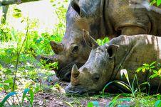 Free Two Brown Rhinoceros On Grass Field Stock Photo - 126178300
