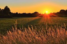 Free Sunray Across Green Grass Field Stock Images - 126178454
