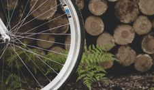 Free Bicycle Tire Near Fern Plant And Pile Of Wood Logs Stock Photo - 126178480