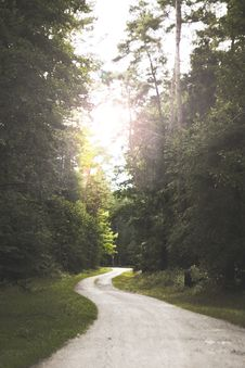 Free Winding Road Near Forest Stock Image - 126178701