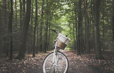 Free City Bicycle In The Middle Of Forest Trail Royalty Free Stock Images - 126178779
