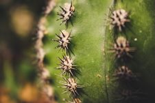 Free Close-Up Photography Of Cactus Thorns Royalty Free Stock Photos - 126178798