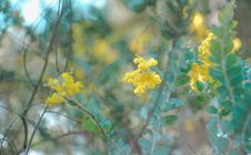 Free Shallow Focus Photography Of Tree With Yellow Petal Flowers Royalty Free Stock Photos - 126178898