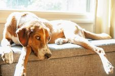 Free Dog Laying By The Window Royalty Free Stock Photography - 126178917