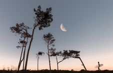 Free Half Moon And Silhouette Of Trees Stock Photos - 126178983