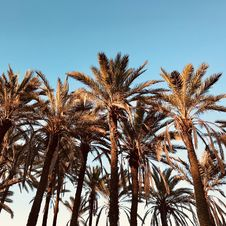 Free Palm Trees Under Blue Calm Sky Royalty Free Stock Photography - 126178997