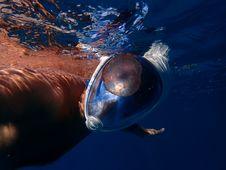 Free Man Swimming Wearing Full-face Snorkelling Mask Stock Photos - 126179043