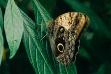 Free Closeup Photography Of Owl Butterfly Perched On Green Leaf Stock Images - 126179074