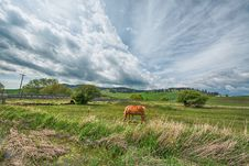 Free Orange Horse On Green Grass Field Under Gray Clouds Stock Images - 126179164