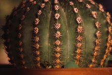 Free Green Ball Cactus Close-up Photography Royalty Free Stock Photos - 126179188